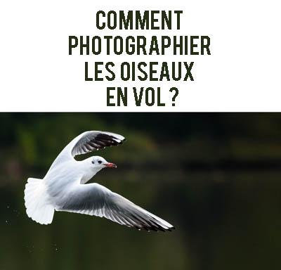 Comment faire des photos d 39 oiseaux en vol r ussies progresser en - Comment effrayer les oiseaux ...